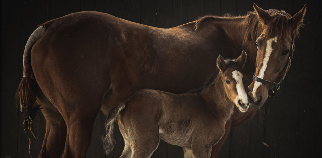 mom-foal-stable2-opt2