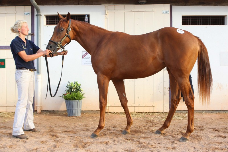 Dubawi Hit The Sky filly