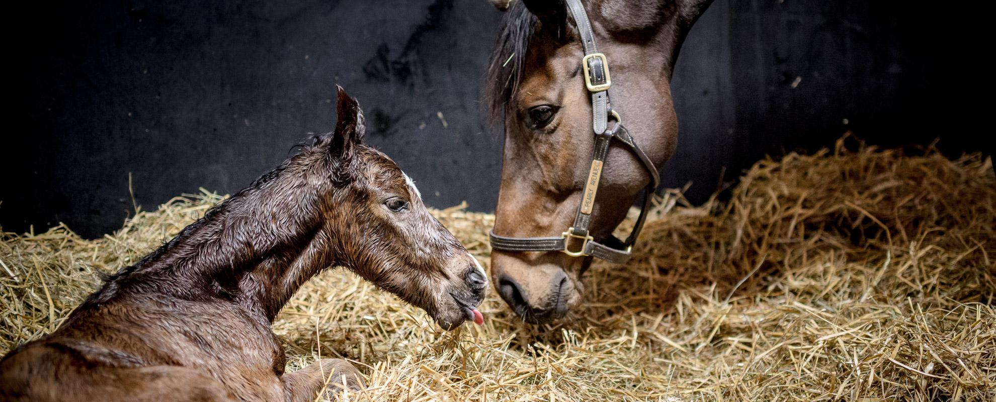 horses_foals_main_001