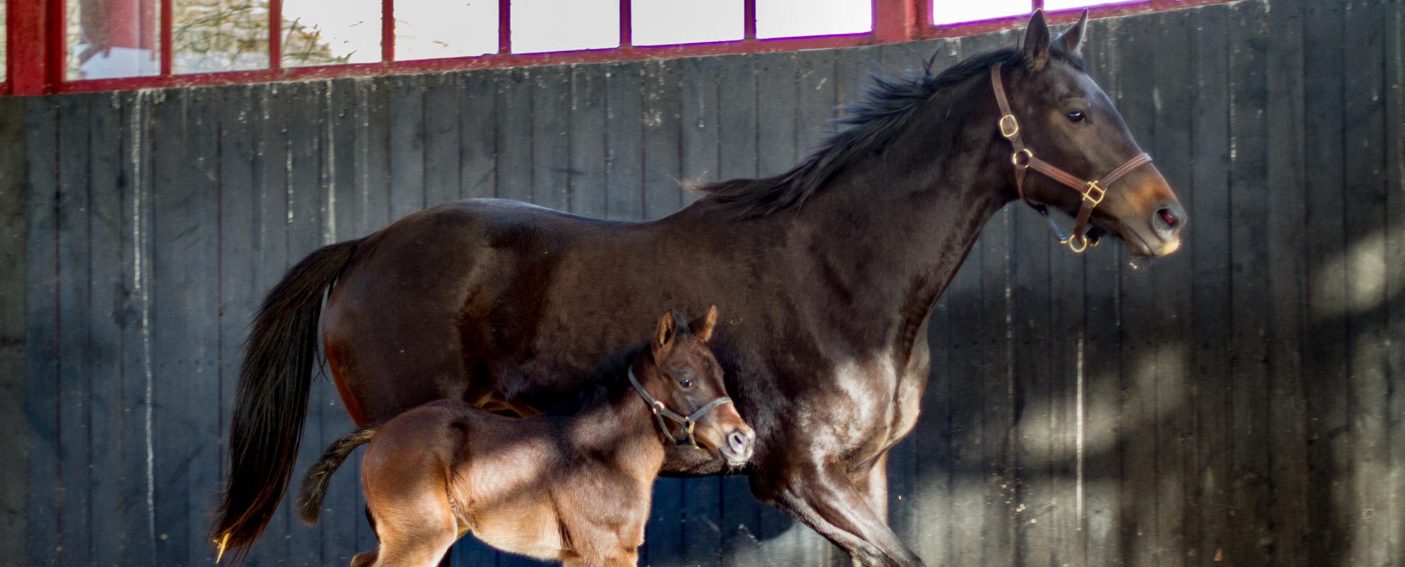 horses_foals_main_004