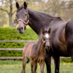 horses_foals_n16glorioussight_001