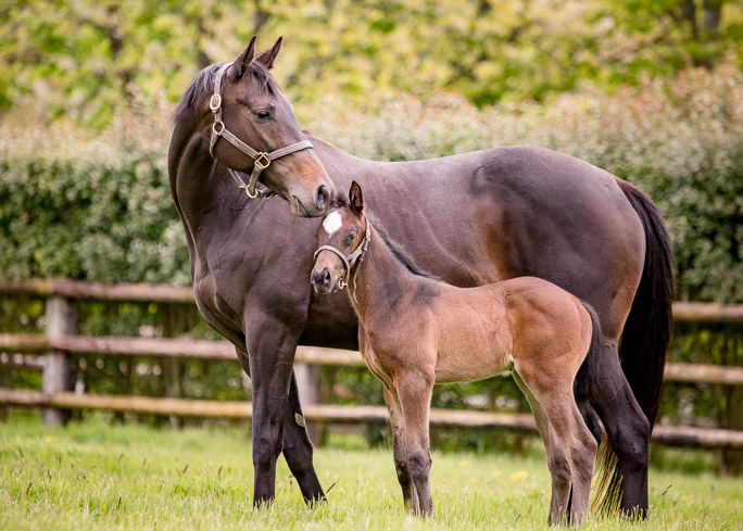 horses_foals_n16glorioussight_002
