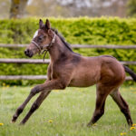 horses_foals_n16glorioussight_003