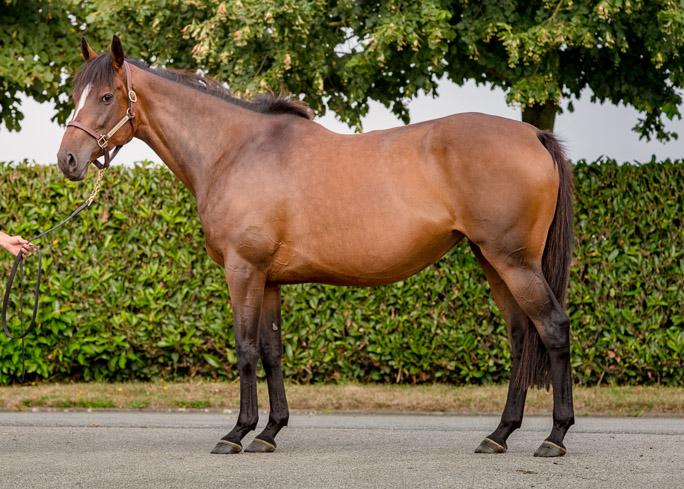 horses_mares_amorine_001