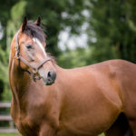 horses_mares_amorine_003