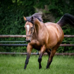 horses_mares_amorine_004