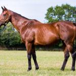 horses_mares_celebrevadala_001
