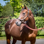 horses_mares_celebrevadala_002