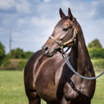 horses_mares_glorioussight_002