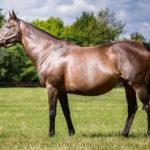 horses_mares_kitcat_002