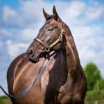 horses_mares_kitcat_003