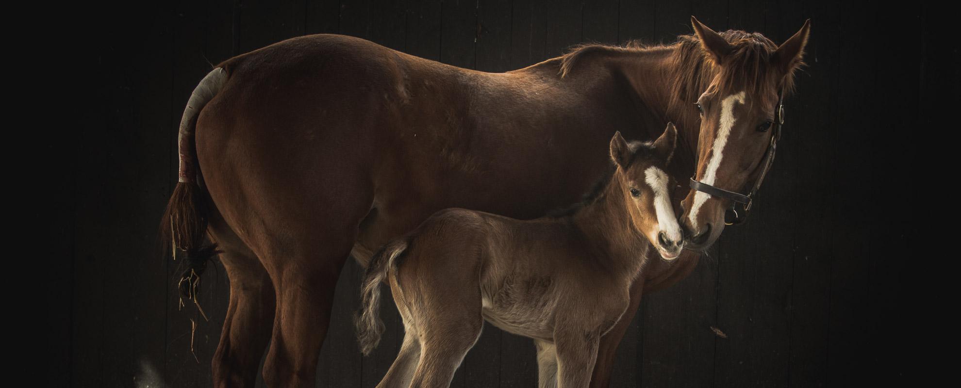 horses_mares_main_002