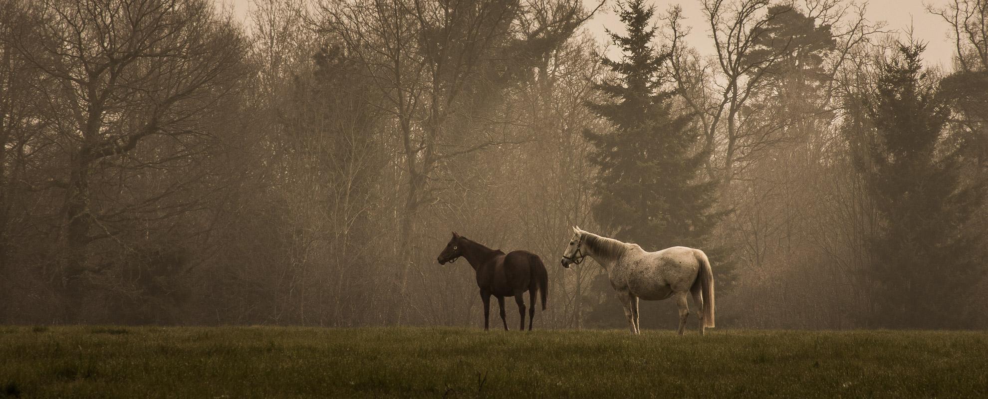 horses_mares_main_004