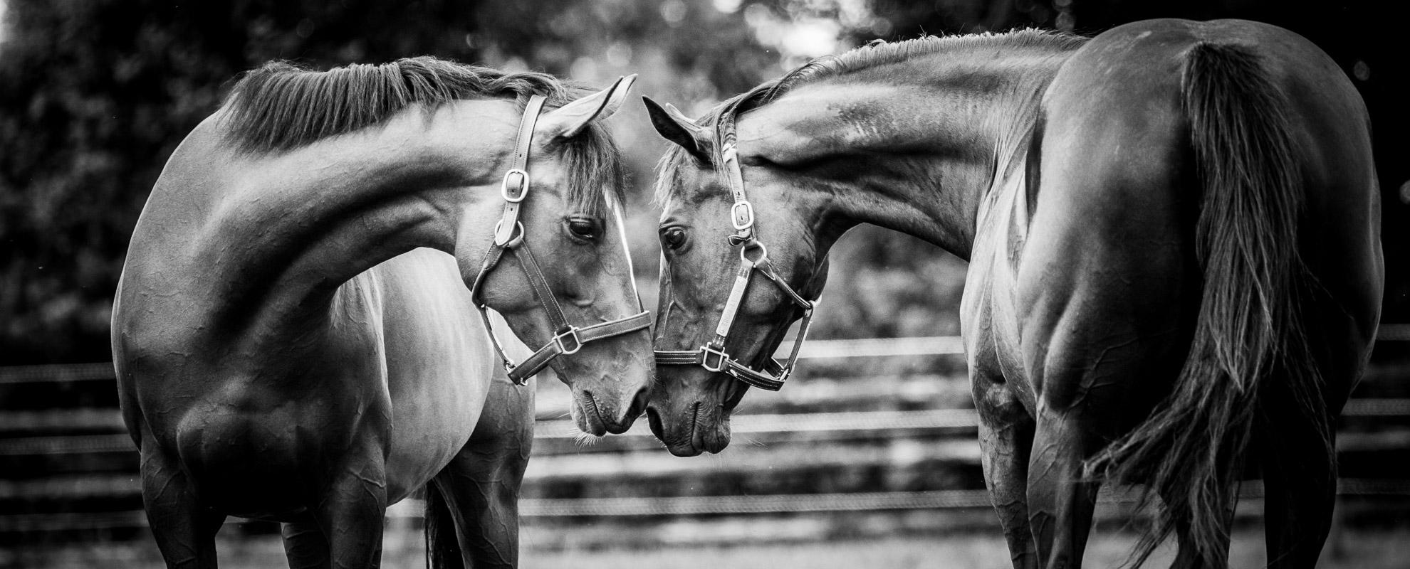 horses_mares_main_005