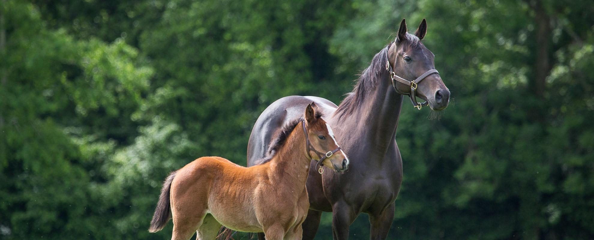 horses_mares_main_007