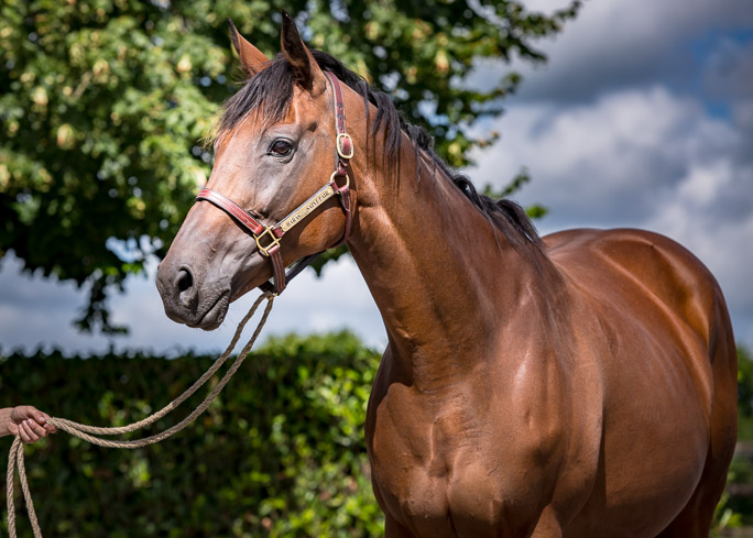 horses_mares_pearlbanks_002