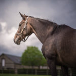 horses_mares_pearlyshells_003