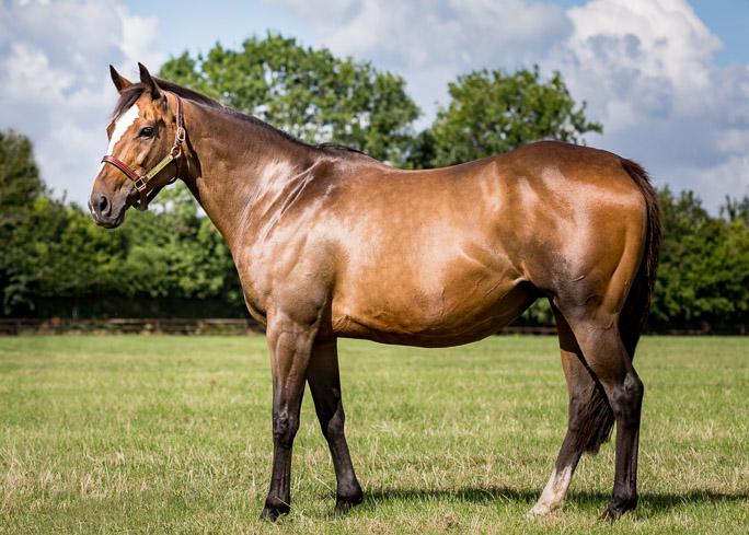 horses_mares_subrose_001