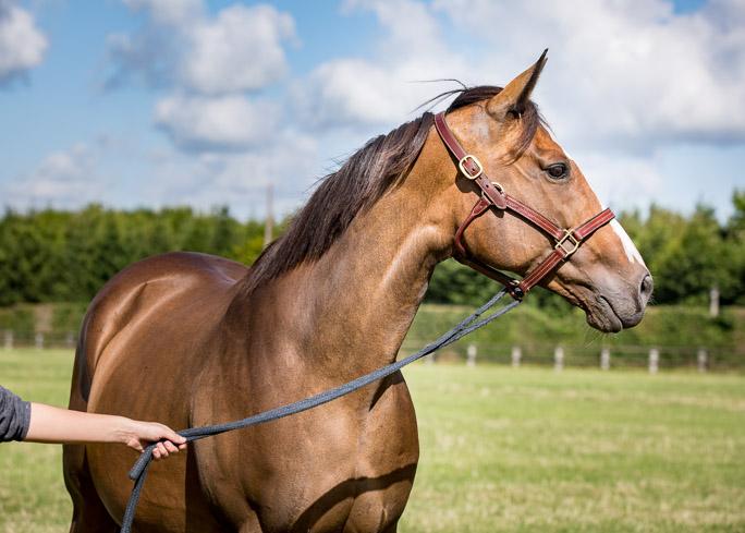 horses_mares_subrose_002
