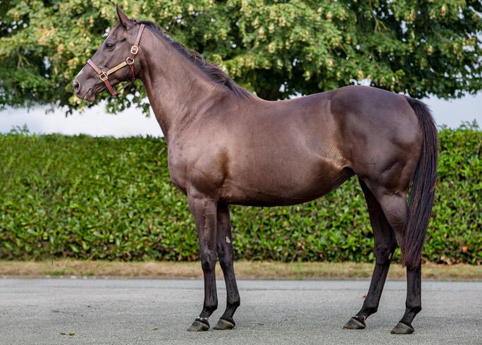 horses_mares_troislunes_001