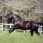 horses_mares_troislunes_002