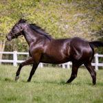 horses_mares_troislunes_003