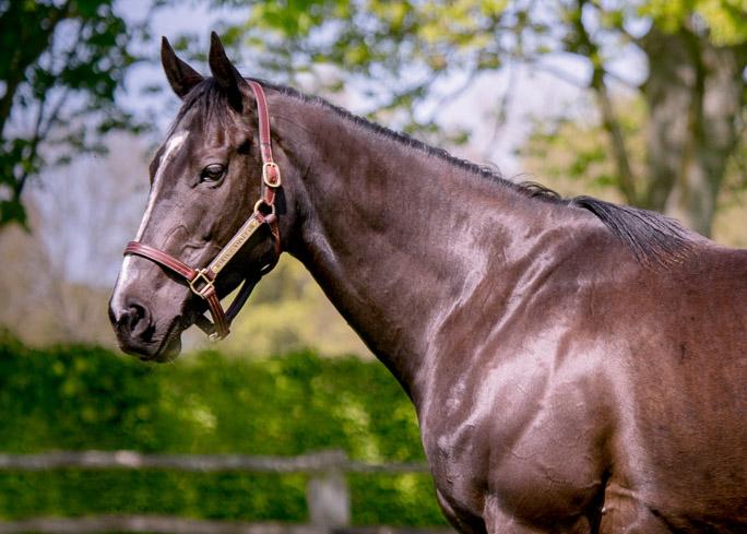horses_mares_troislunes_004