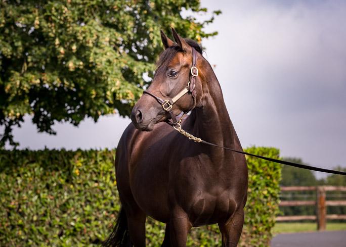 horses_mares_viamanzoni_001