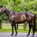 horses_mares_viamanzoni_002