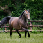 horses_mares_viamanzoni_003