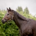 horses_mares_viamilano_003