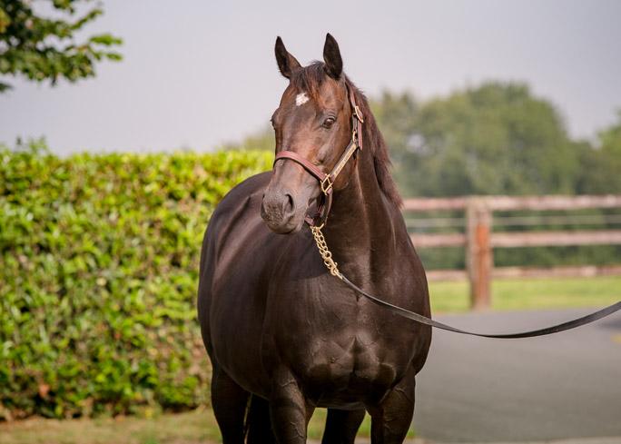 horses_mares_viamilano_004