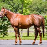 horses_mares_viapisa_001