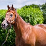 horses_mares_viapisa_002