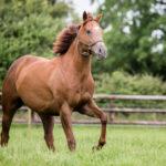 horses_mares_viapisa_003