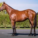 horses_yearlings_n15pearlbanks_001