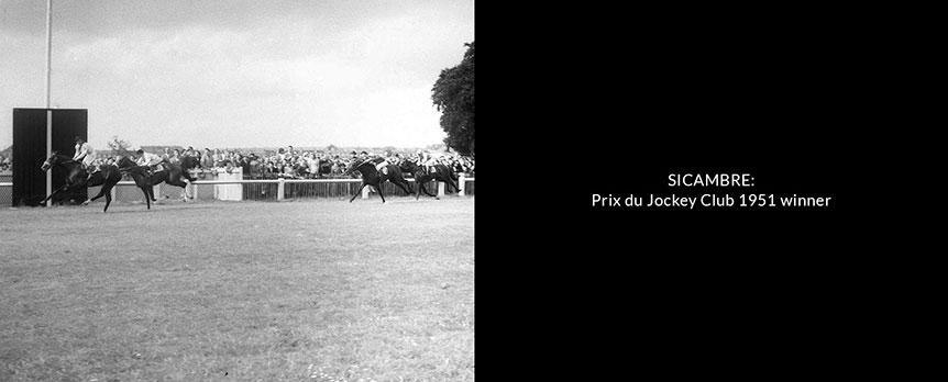 sicambre-prix-du-jockey-club-1951-winner-new-small