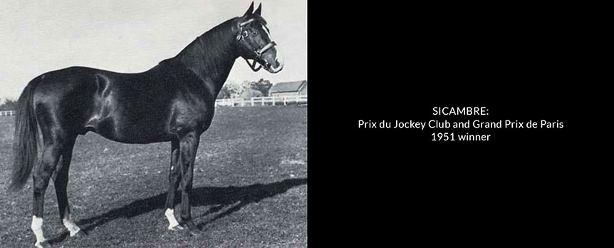 sicambre-prix-du-jockey-club-and-grand-prix-de-paris-1951-winner-small