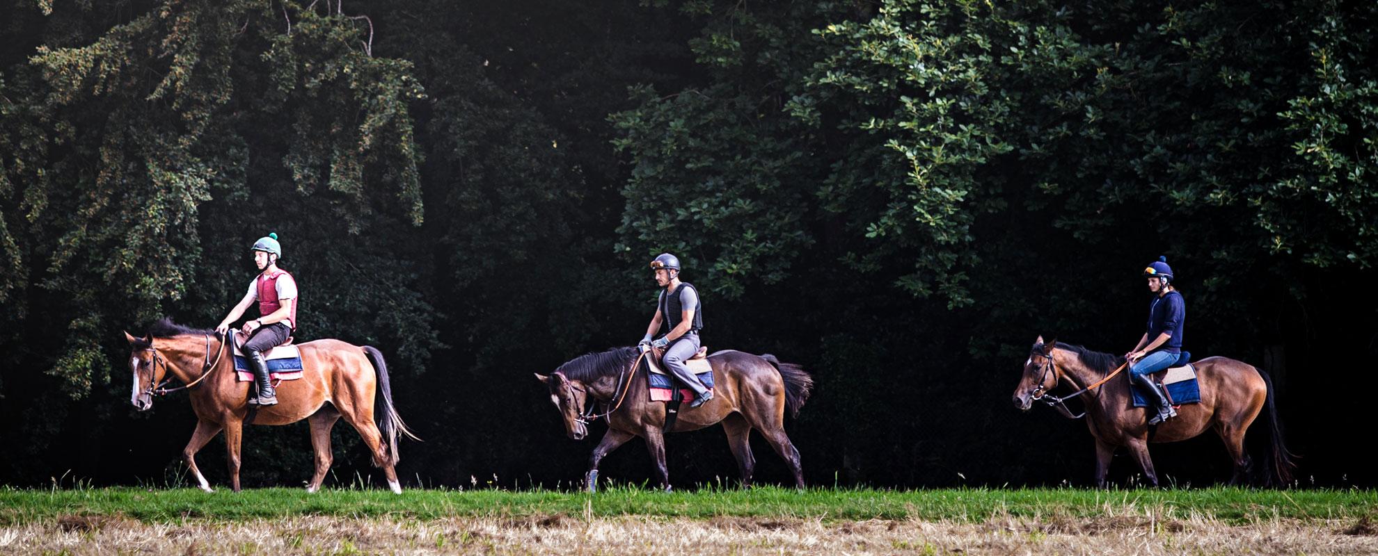 horses__training_maine_001-opt