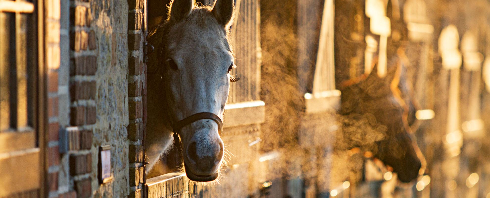 horses_mares_main_002-opt