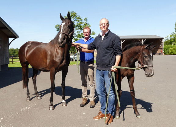 Andreas Putsch with Trois Lunes and her Kendargent colt foal at Haras de Saint Pair, Cambremer, 7 July 17