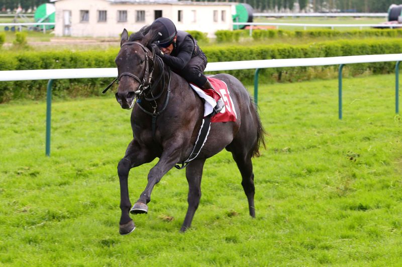 Deauville - 11/05/2017 - ARQANA BREEZE UP - Lot 95  - N(BUGIE D'AMORE 2015) -