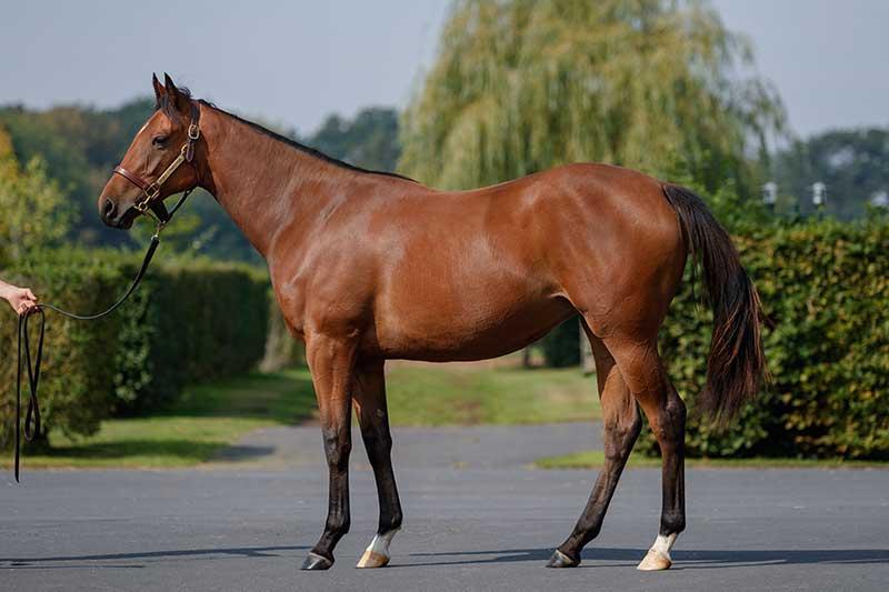 N17-Sepoy-x-Arabian-Beauty-180903-6-resized